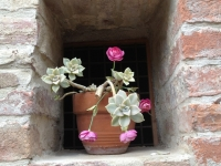 pink flower in hole