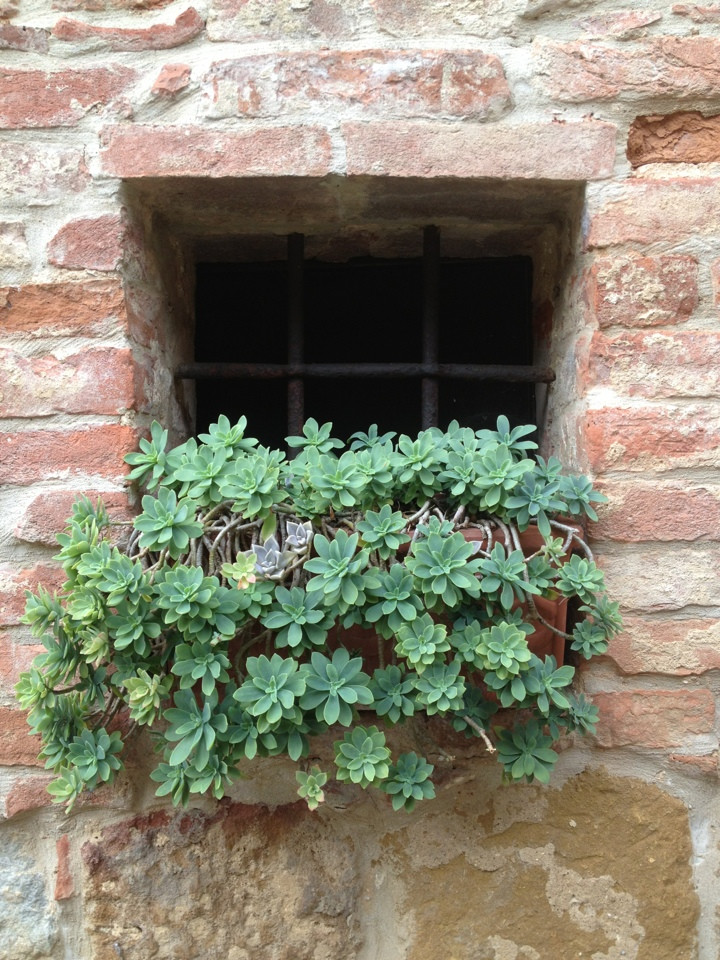 plant in window